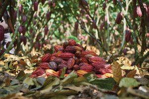 San Fernando - Cocoa