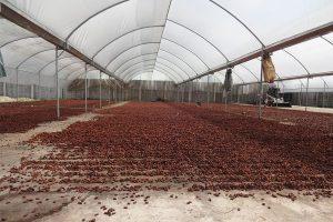 San Fernando - sèchage des fèves